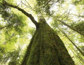 Gelebter Umweltschutz und Nachhaltigkeit - Unsere ökologische Verantwortung