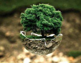 Holz reduziert Treibhausgase